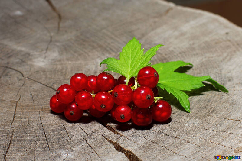 A bunch of red currant №33222