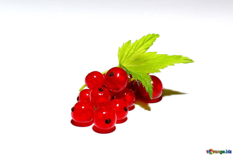 A bunch of red currants isolated №33224