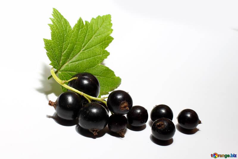Frutti di bosco e ribes nero foglia in isolamento №33161