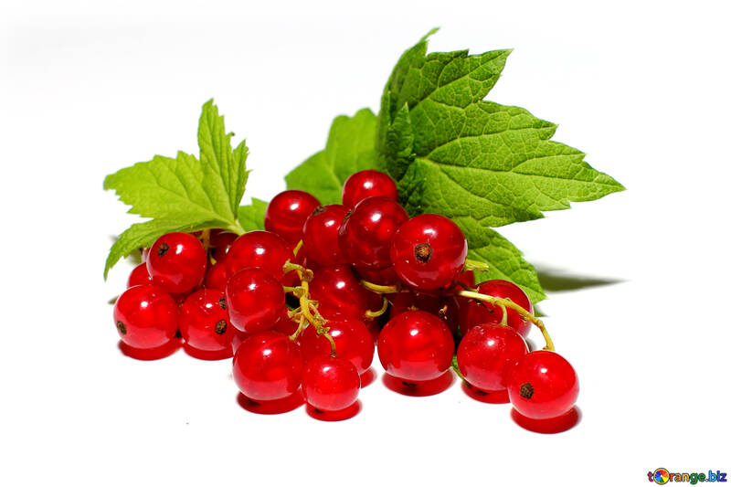 Red currant isolated №33227
