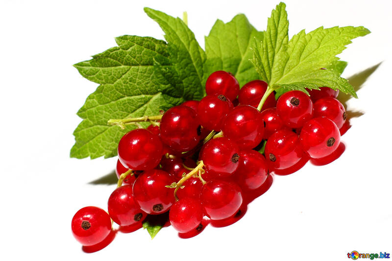 Red currant isolated on white background №33230