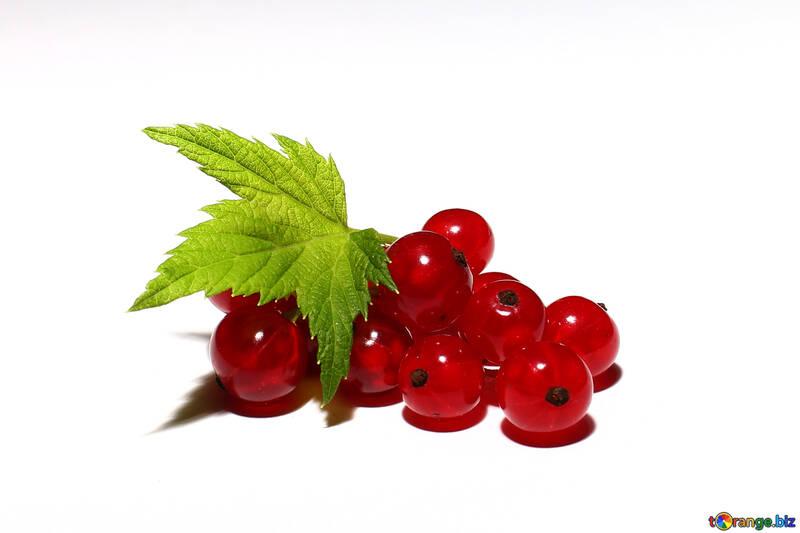 Redcurrant berries isolated №33223