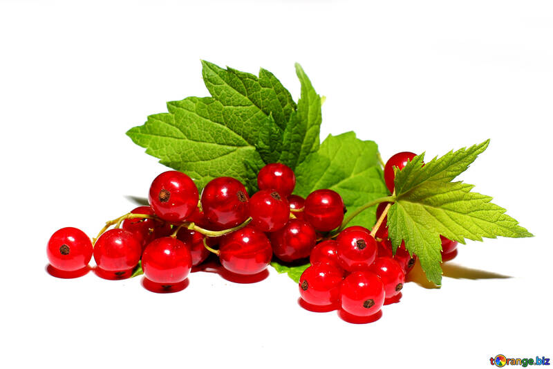 Ripe red currant isolated №33225