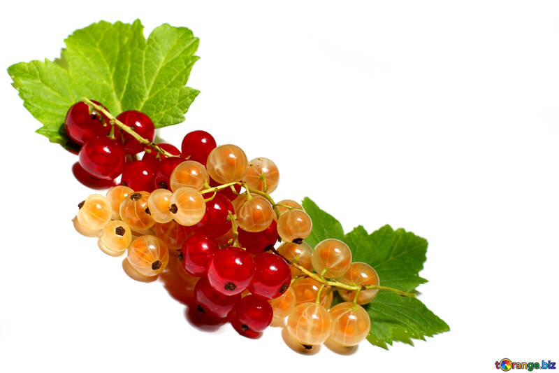 Ribes bianco e rosso in isolamento №33177