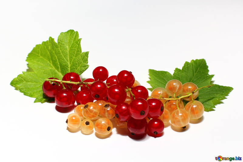 Currant isolated №33178