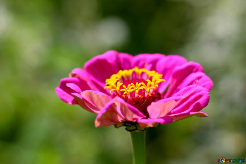 Фон красивый цветок на десктоп  №33440