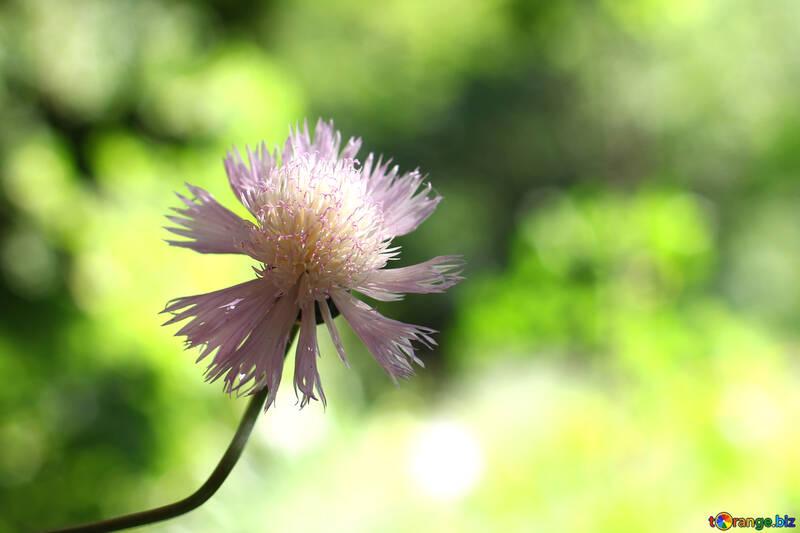 Цветочный фон  №33429
