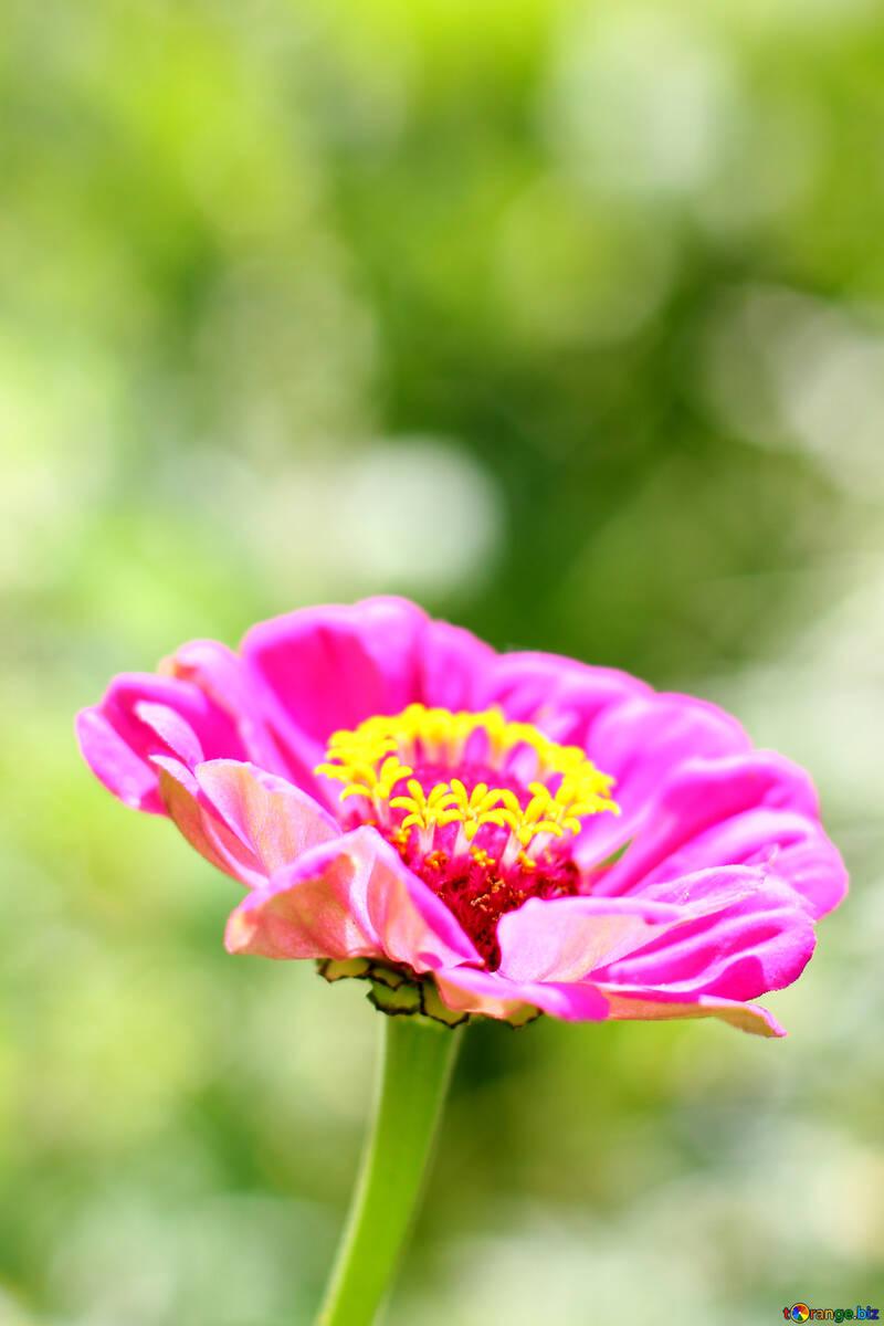 Major flower №33439