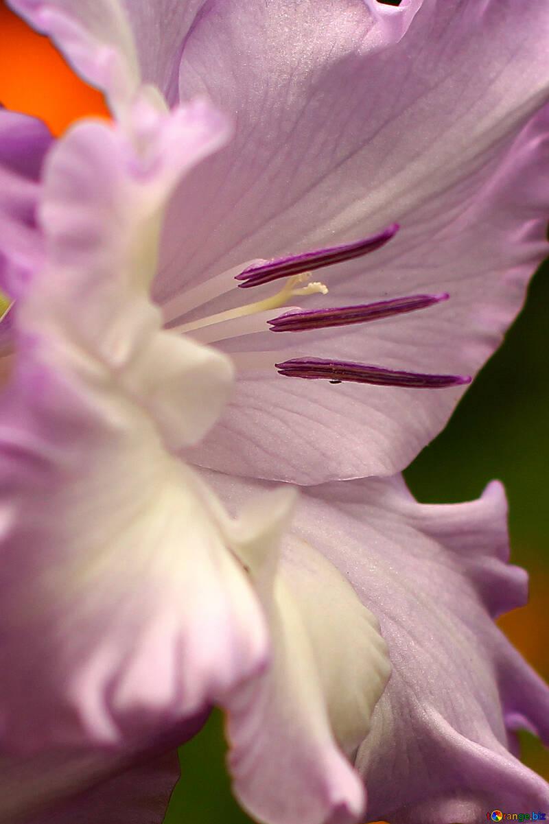 Macro fiore №33752
