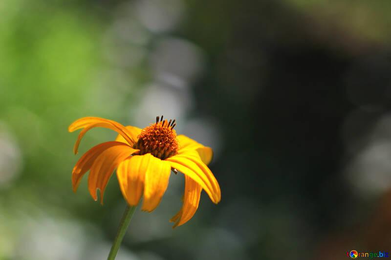 Фон с цветочком  №33467