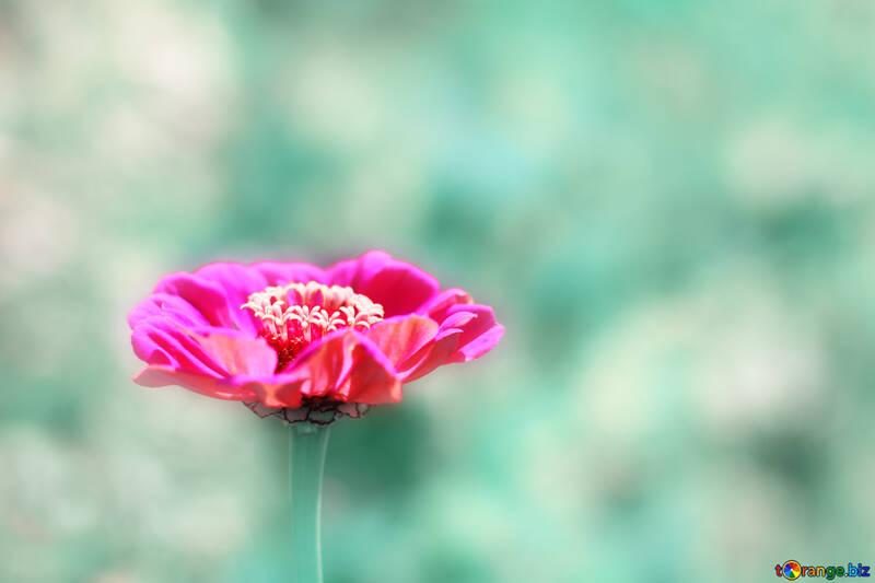 Фон с красивым цветком  №33446