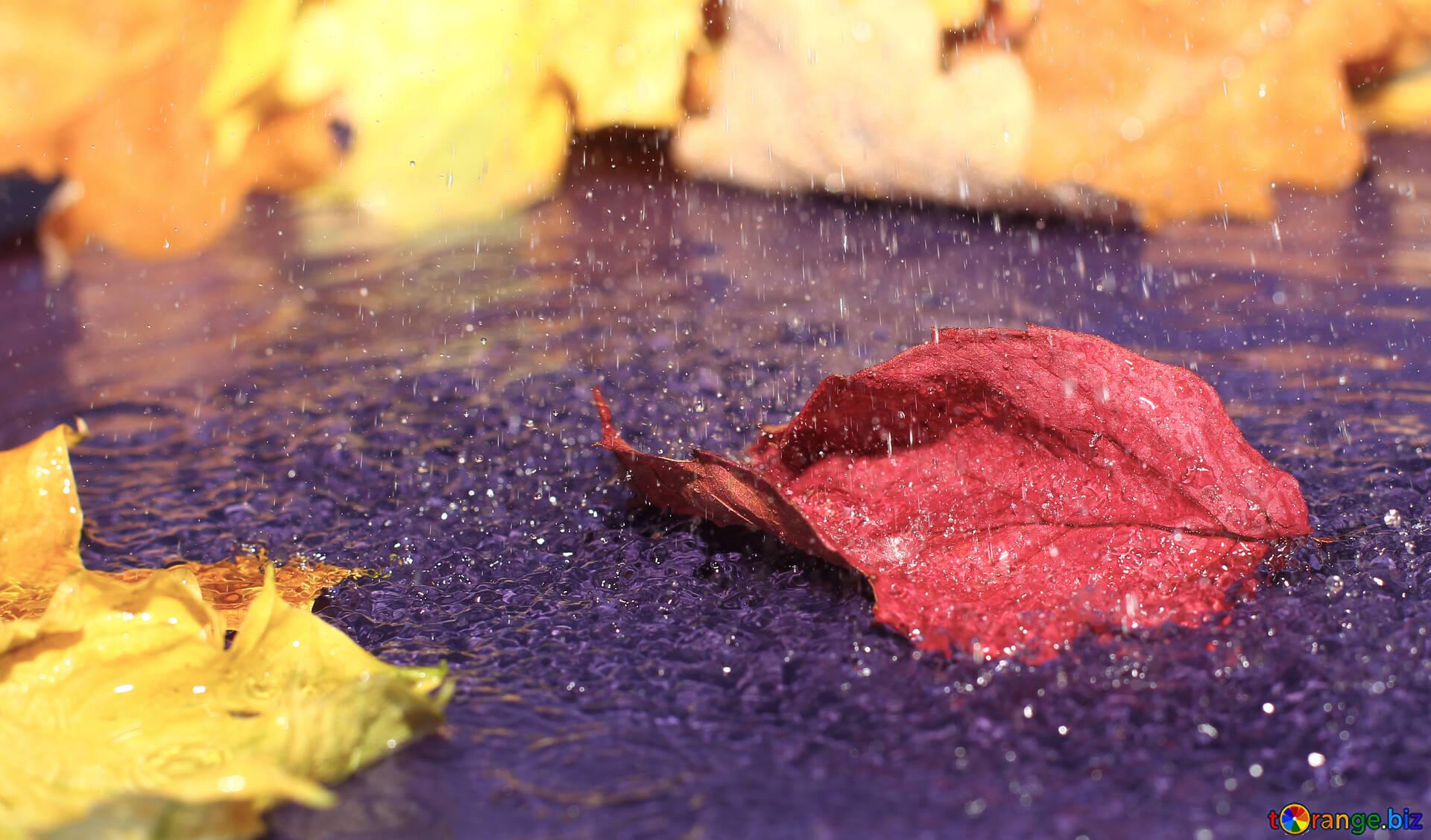 Herbstblatter Im Wasser Herbst Hintergrundbilder Desktop