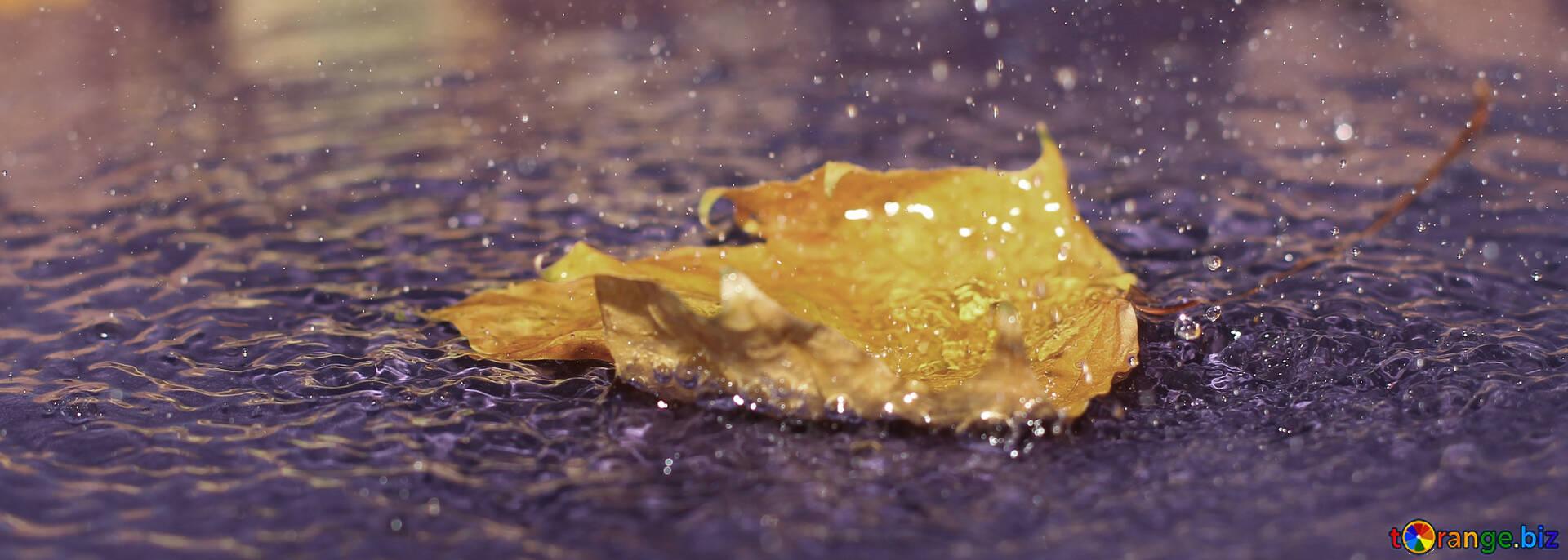 Autumn rain rain fall cover on fb leaves № 34707