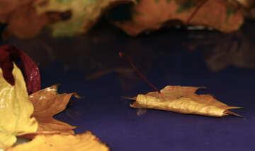 Autumn picture postcards №34617