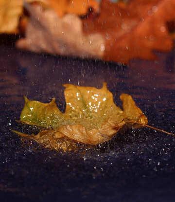 Autumn rain №34641