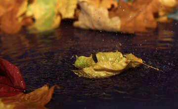 Autumn evening №34653