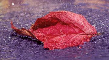Beautiful autumn №34667