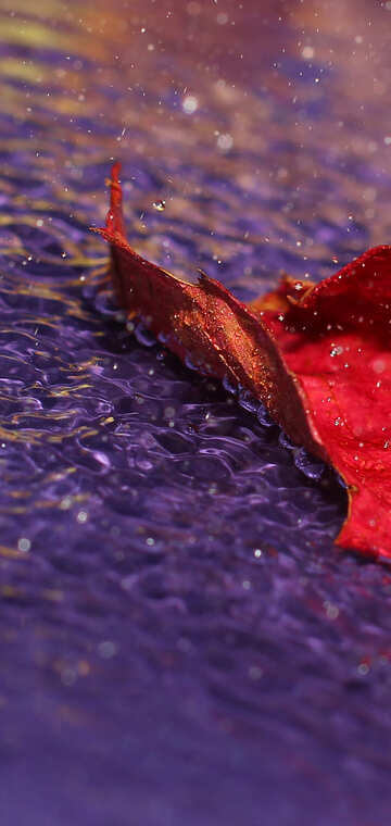 Autumn leaf №34675