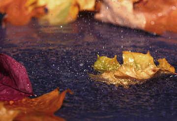 Golden autumn №34645