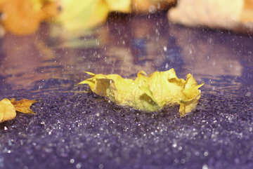 Rainy autumn