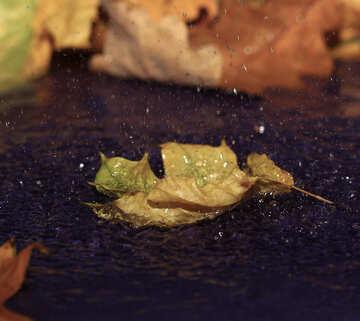 Dark autumn water №34651