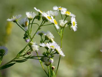 Grass as Daisy №34382