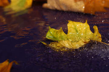 Desktop wallpaper of autumn rain №34629