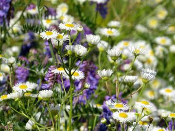 Flowers in field №34366