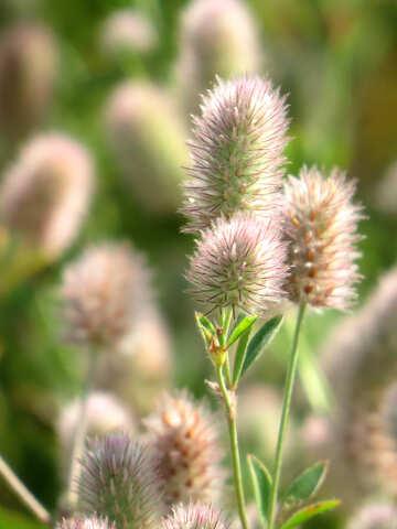Flor esponjoso №34360