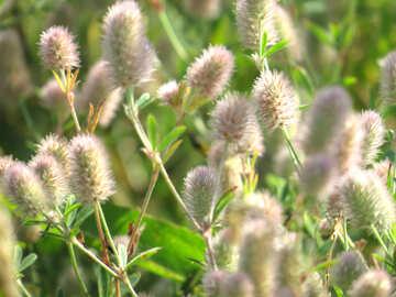 Flores suaves №34361