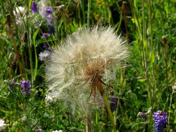 Fluffy white flower №34423