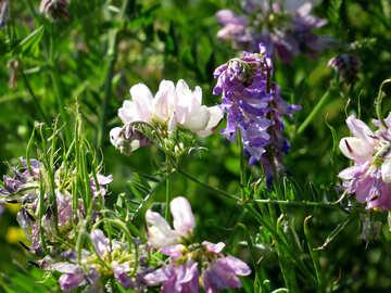 Vivid Meadow Flowers №34387
