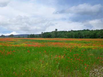 Blooming Prairie №34294