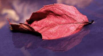 Red autumn leaf №34683