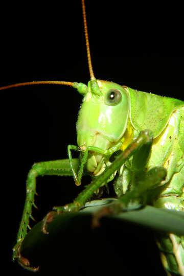 Grasshopper macro №34016