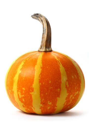 Pumpkin in isolation №34994