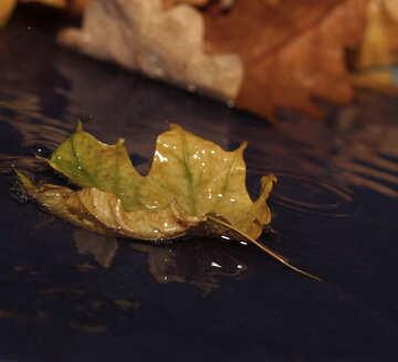 Autumn rain №34621