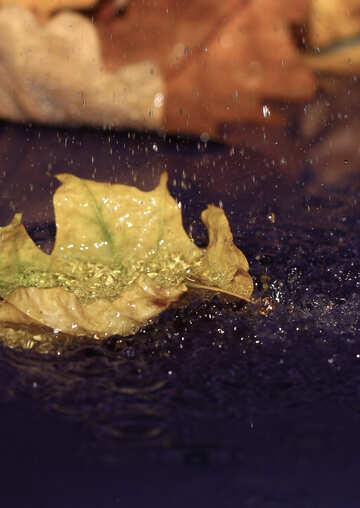 Autumn rain №34633