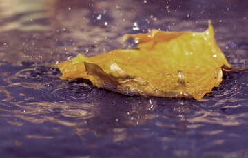 Autumn rain №34697