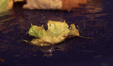 Drops autumn rain №34627