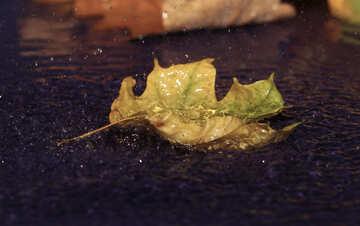 Under the autumn rain №34631