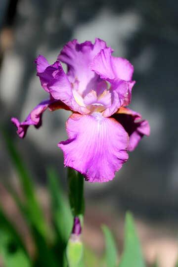 Beautiful flower №34782