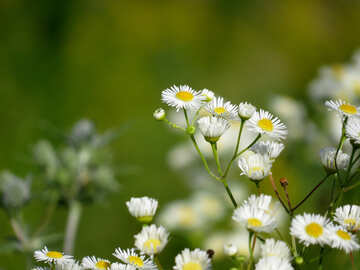Green background with daisies №34377