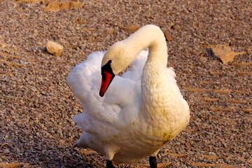 White Swan №34088