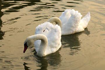 White Swan near №34046