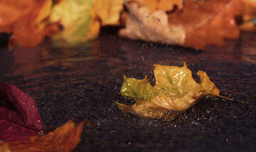 Autumn leaf in puddle №34639