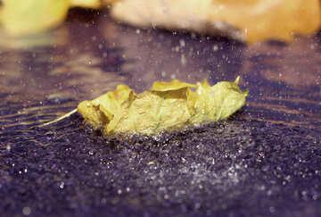Puddle of autumn №34685