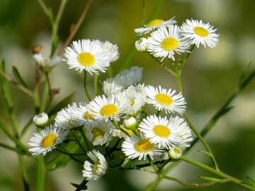 Beautiful wild flowers №34381