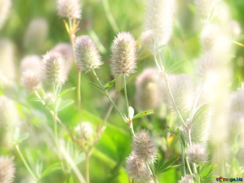 Helle Sommer Hintergründe mit flauschigen Wildblumen №34358