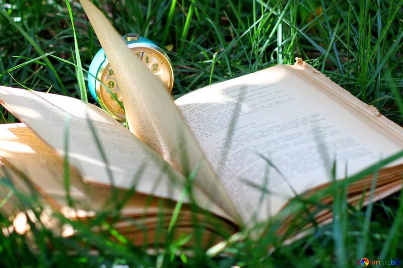 Resultado de imagem para lendo livro na grama